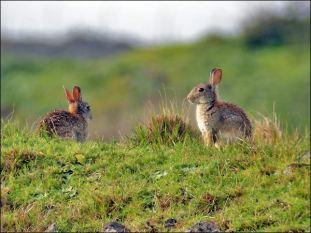 rabbit080216b