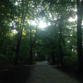 berlin trees